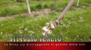 Azienda_Agricola_Da_Ros_e_la_brina.2